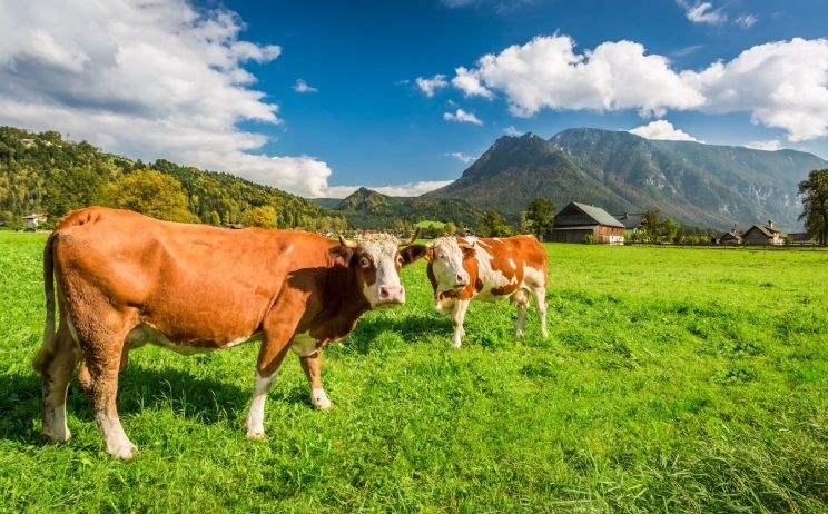 Gesetzesänderung auf dem Forst- und Agrarimmobilienmarkt
