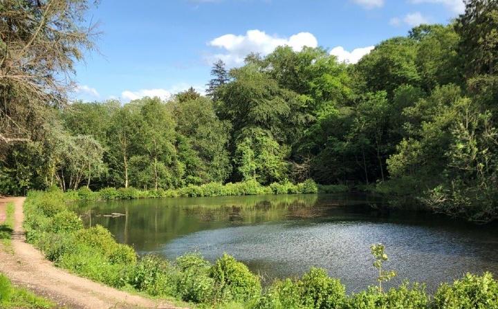 Eagle Hall Woods, Pateley Bridge, Harrogate, North Yorkshire