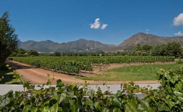 Vineyards, Le Jardinet on Champagne, Western Cape