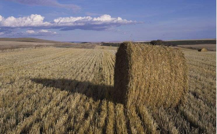 Havest field