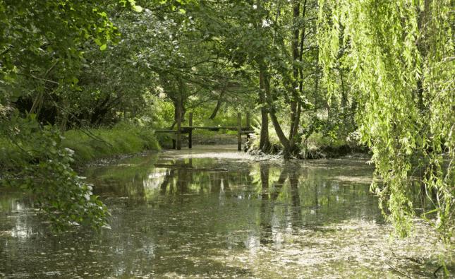 6 of the Best: Isle of Purbeck, Dorset - garden