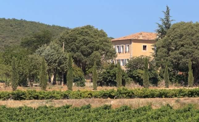 Vineyards, Provence
