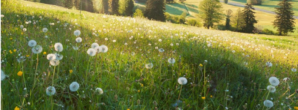 Rewilding agricultural land