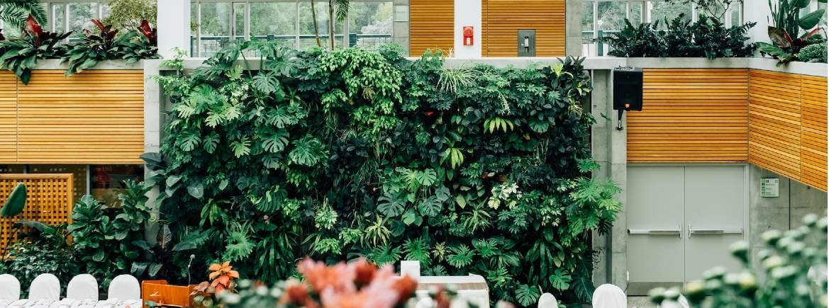Living wall by Scott Webb/Unsplash
